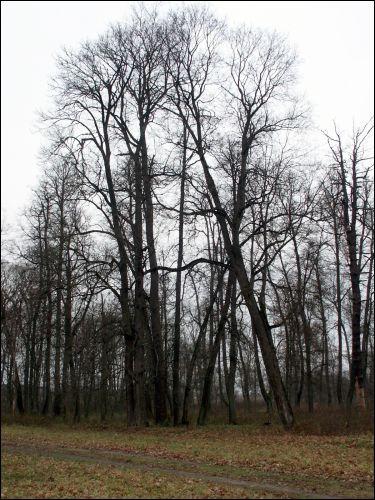 - Сядзібна-паркавы ансамбль Завішаў. Стары парк