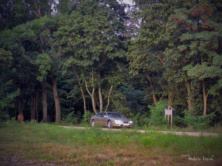 - Zespół dworsko-parkowy .