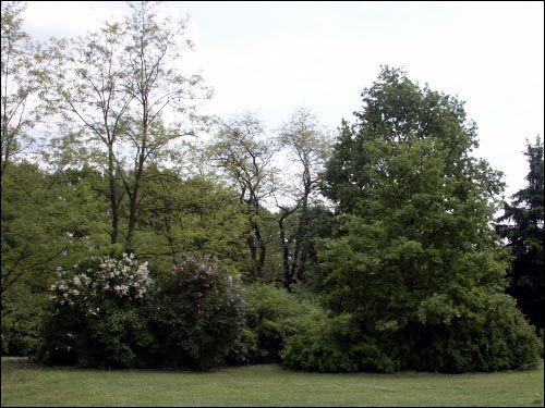 -  Сад батанічны. Куток саду