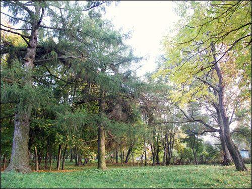 - Zespół dworsko-parkowy Jelskich. Park