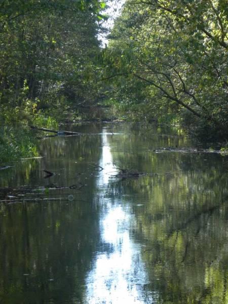 -  Канал Агінскага.