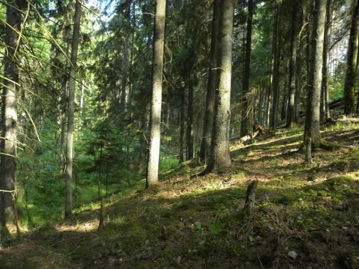 Фото в лесу раком 62079 фотография
